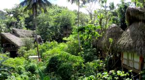 Dominican Huts